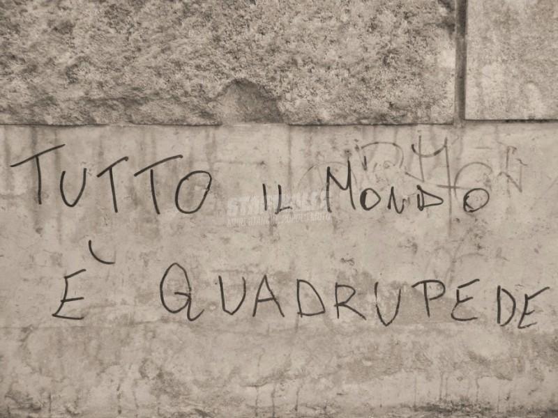 Scritte sui Muri A quattro zampe